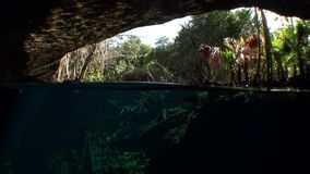 Yucatan Mexico cenotes. Clean and clear underground water stock video footage
