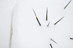 Yucca που καλύπτεται στο χιόνι Στοκ φωτογραφία με δικαίωμα ελεύθερης χρήσης