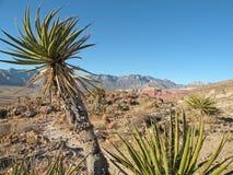 yucca φυτών Στοκ φωτογραφία με δικαίωμα ελεύθερης χρήσης