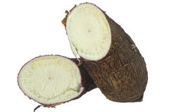 Yucca Stock Images