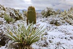 yucca royalty-vrije stock afbeelding
