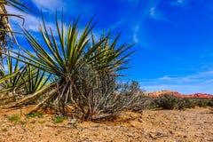 Yucca-Anlage Lizenzfreies Stockbild
