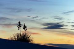 Yucca au coucher du soleil Photographie stock