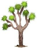 The Yucca brevifolia tree. Illustration of the Yucca brevifolia tree on a white background stock illustration