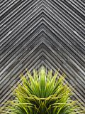 Yucca or cactus plant abstract with diagonal planks of wood in t. He background royalty free stock image