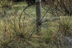 Yucca con filo spinato e la ruota dell'oggetto d'antiquariato fotografia stock libera da diritti