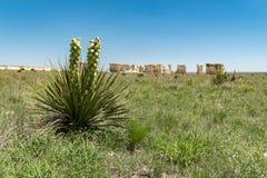 Yucca con le piramidi del gesso delle rocce del monumento nei precedenti immagini stock