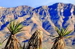 Yucca, das den Berg grüßt Lizenzfreie Stockfotografie
