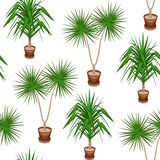 Yucca and dracaena in pots on a white background. A fancy pattern. Suits as wallpaper, as a background for gift wrapping. Creates vector illustration
