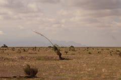 Yucca et paysage du Nouveau Mexique Image libre de droits
