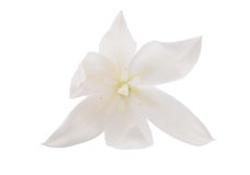 Yucca flower isolated. On white background royalty free stock image