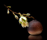 Yucca flower Royalty Free Stock Image