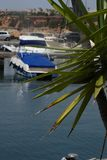 Yucca in front of some ships and boats at a harbour. This is a closeup of a yucca bush in front of some ships and boats at cape Roig in Orihuela royalty free stock images