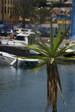 Yucca in front of some ships and boats at a harbour 2. This is a closeup of a yucca bush in front of some ships and boats at cape Roig in Orihuela stock images