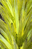 Yucca Glass Sculpture Stock Images
