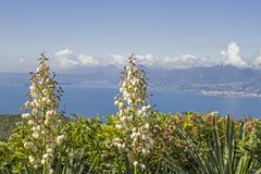 Yucca gloriosa and lake Garda Stock Photo