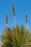 Yucca Grass Stock Images