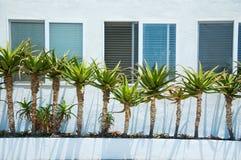 Yucca im Garten stockbilder