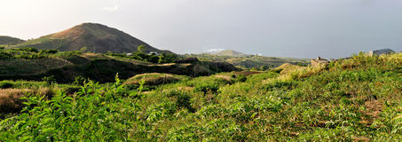 Yucca or manioc fields  in Fogo, Cabo Verde Stock Photography