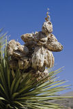 A Yucca near Death Valley Stock Image