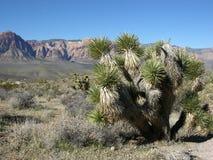 Yucca nella priorità alta e parte del canyon rosso della roccia, Nevada Fotografia Stock Libera da Diritti