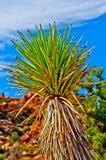 Yucca Plant royalty free stock photos