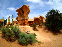 Free Yucca Plant And Hoodoos On Sandstone Desert Landscape In Escalante, Utah Stock Image - 74303511