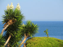 Yucca plant on a background of the sea. Royalty Free Stock Photo