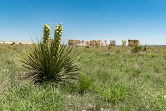 Yucca plant with chalk pyramids of Monument Rocks in the background stock images