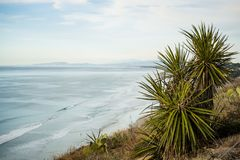 A Yucca Plant at the Coastal. And beautiful view to Pacific Ocean stock image
