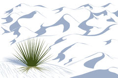 Yucca plant in a dessert. White Sands dessert vector illustration. White dunes royalty free illustration