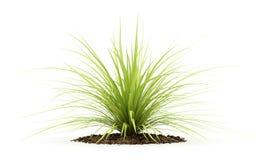 Yucca plant isolated on white. Background stock illustration