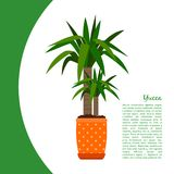 Yucca plant in pot banner. Yucca indoor plant in pot banner template, vector illustration royalty free illustration