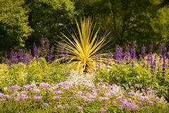 Yucca Plant Surrounded By Flowers Stock Photos