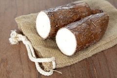 Yucca root Royalty Free Stock Photo