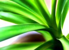 Yuccabaum sehr nah lizenzfreie stockfotos