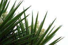 Yuccabetriebsblumen und -blätter Lizenzfreies Stockbild