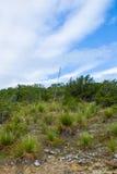Yuccastiel Lizenzfreie Stockbilder