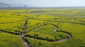 Yuchae Canola kwiatu festiwal w Nakdong rzece, Busan, Południowy Korea, Azja zbiory