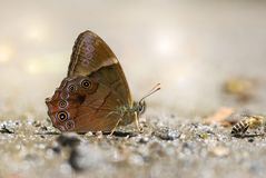 Yudai mountains shade butterfly Stock Photography