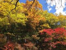 Yudaki-Wasserfall Stockbild