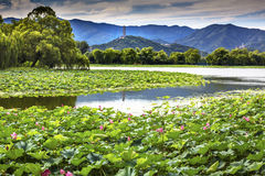 Yue Feng Pagoda Lotus Garden Reflection-de Zomerpaleis Peking, C stock afbeelding