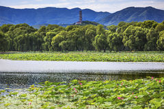 Yue Feng Pagoda Lotus Garden Summer Palace Beijing China Royalty Free Stock Photo