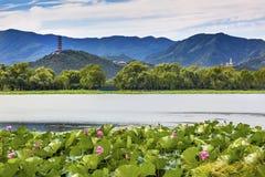Yue Feng Pagoda Lotus Garden Summer-Paleis Peking China royalty-vrije stock afbeeldingen