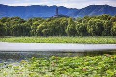 Yue Feng Pagoda Lotus Garden Summer-Paleis Peking China royalty-vrije stock foto