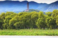 Yue Feng Pagoda Lotus Garden Summer-Paleis Peking China stock foto's