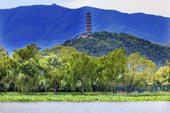 Yue Feng Pagoda Lotus Garden Willow Trees Summer Palace Beijing, China stock image