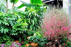 Yuexiu park Gardening Royalty Free Stock Photo