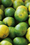 Yuko. Citrus  is a kind of Japanese citrus Stock Images