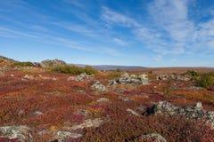 Yukon arktisk tundra i nedgångfärger royaltyfria foton